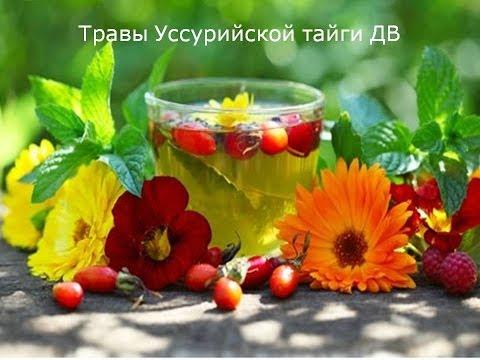 Настойка Болиголова - Травомаркет