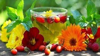 видео Дары природы - растения и цветы, полезные травы, грибы и ягоды, орехи