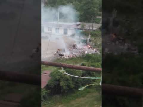 Абхазия Пицунда, коровы едят мусор