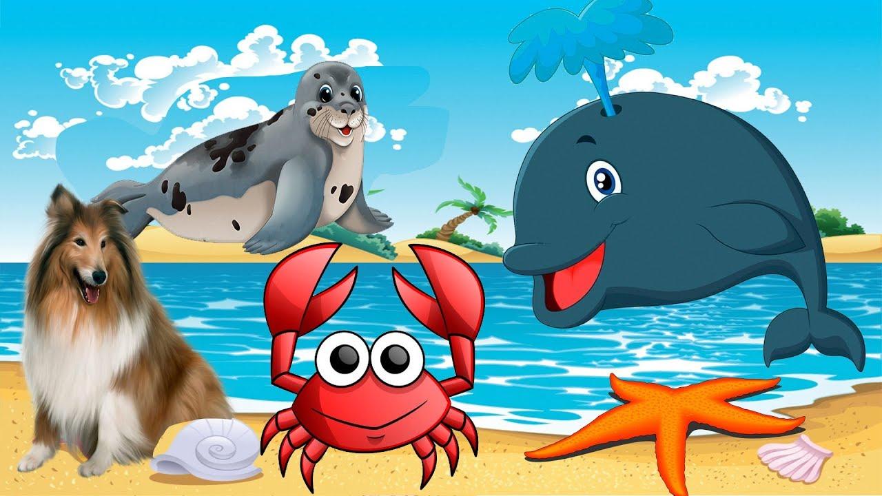 Морские Животные | домашние животные видео с музыкой