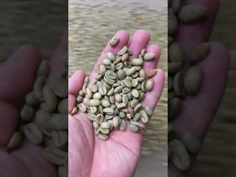3-10 TPD Complete Coffee Bean Cleaning Line Coffee Bean Cleaning Machine and Sorting Machine