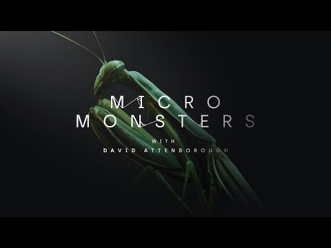 Micro Monsters: The Deadly Lullaby | Oculus TV
