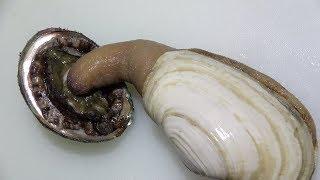 アワビとミル貝をくっつけてみた【刺身の盛り合わせってことね】