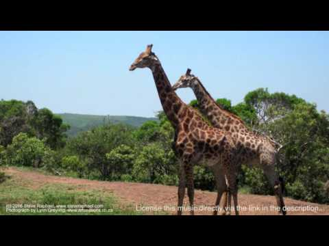Royalty Free Music:  African Adventures (Driving Powerful African Tribal Percussion)