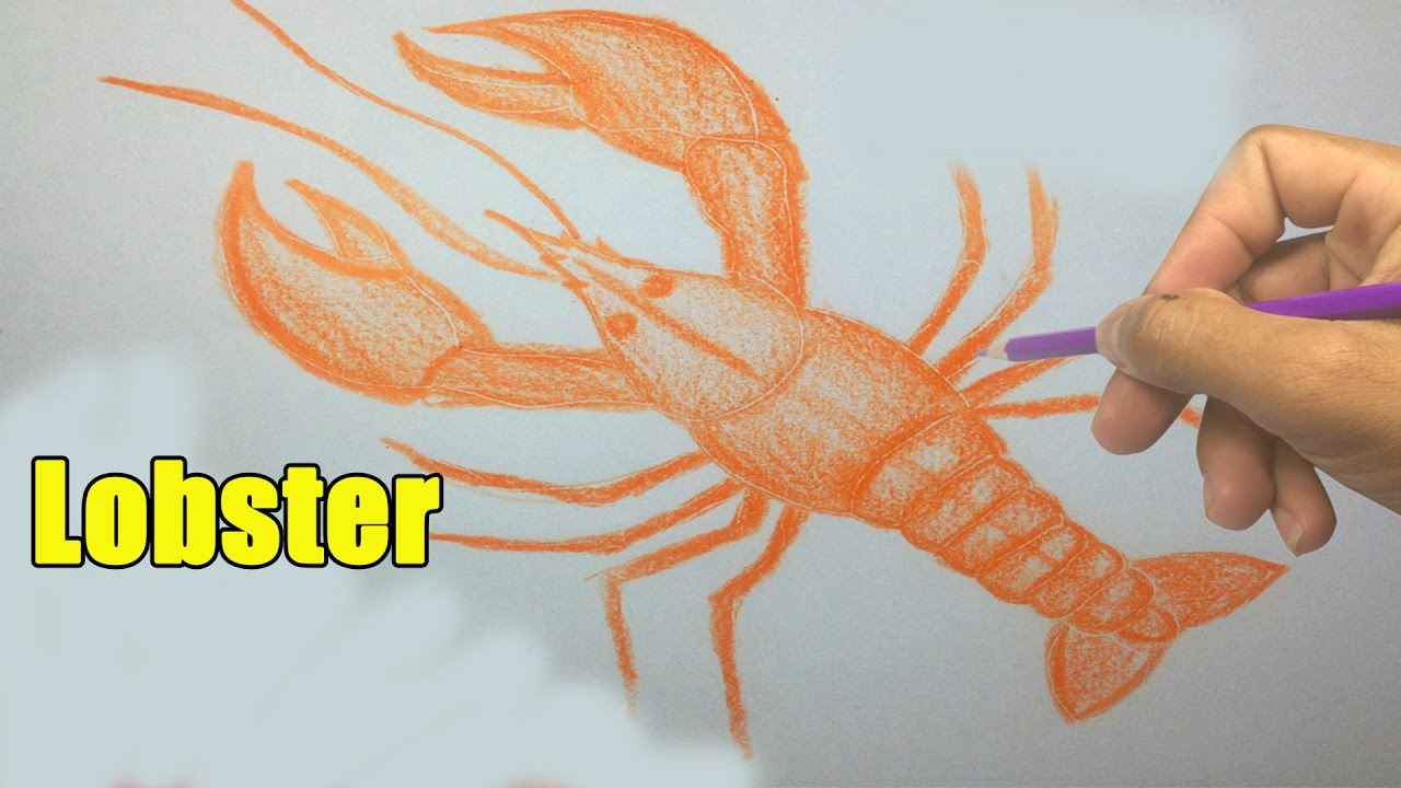 How To Draw A Lobster  Easy Pictures To Draw  Youtube Videos