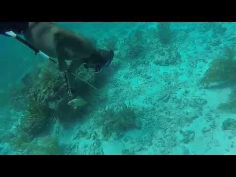 Lobstering Abaco Islands, Bahamas
