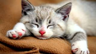 10 Hours of CAT PURRING SOUND | 3D High-Fidelity Sound | Soothing Sound | Sleep Meditation | Yoga thumbnail