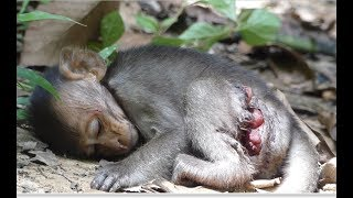 Why mommy leave Milto a lone? Poor baby monkey Milto hungry milk