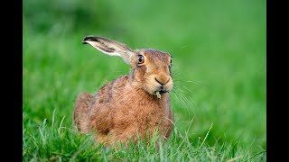 """Детям и взрослым про зайцев. Этого """"зеленые"""" не рассказывают"""