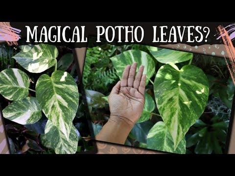 Shop With Me Exotic Rare Unique Plants House Garden Tropicals Collective Plants Youtube
