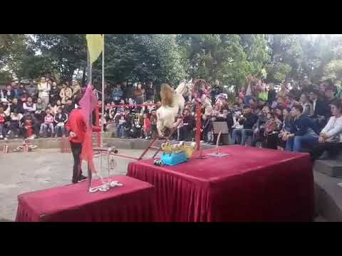 Shanghai circus China #shanghaiDiaries