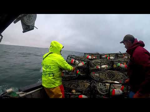 2018 Dungeness Crab Season