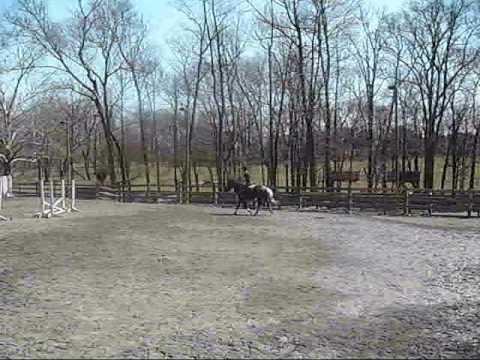 Friar Tuck 13.1 Pony Gelding *SOLD*
