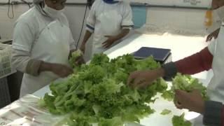 Inovação tecnológica no processamento mínimo de vegetais - Dia de Campo na TV