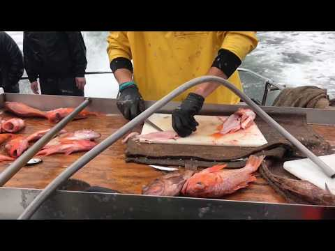 Emeryville Sport Fishing | Tigerfish | Emeryville | April 2018