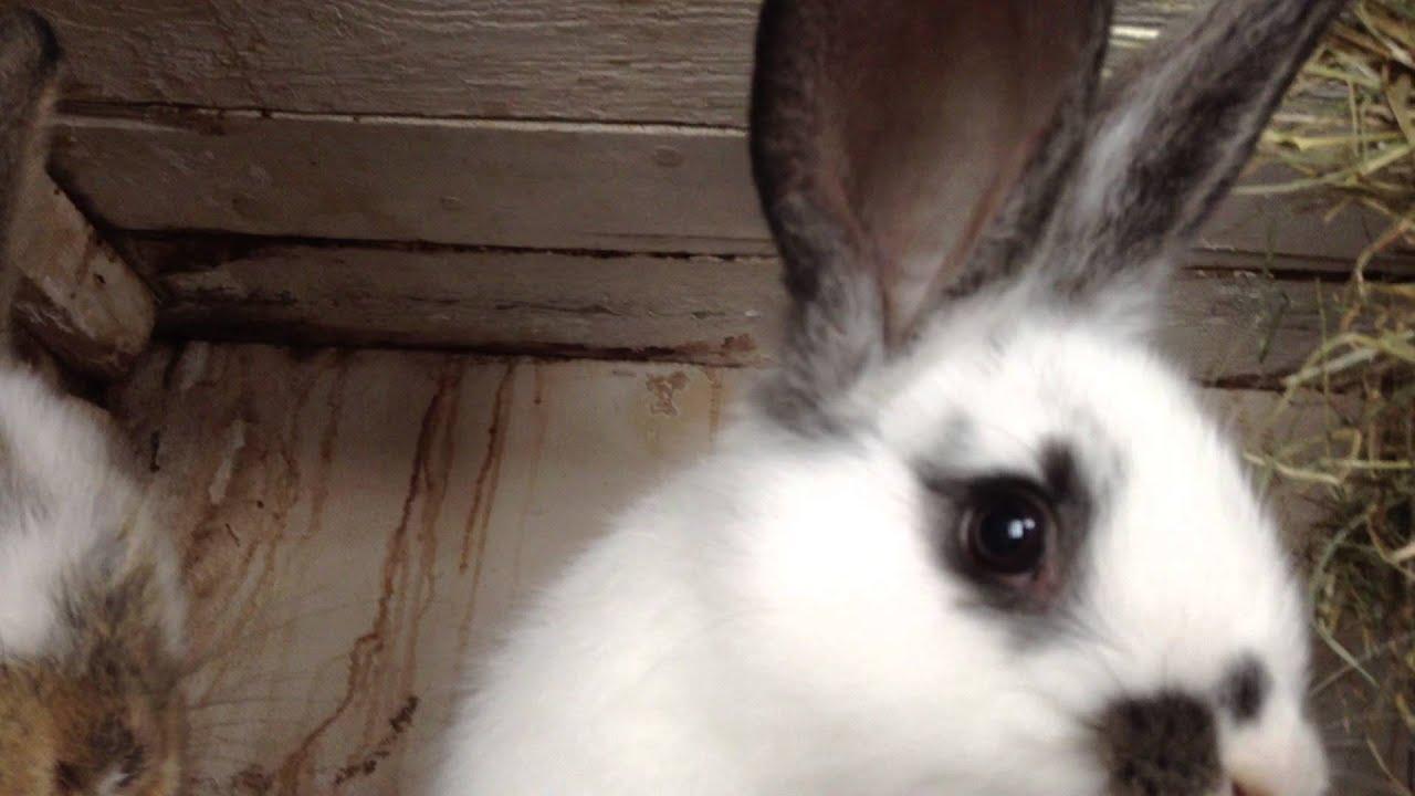 junge kaninchen im stall  youtube