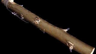 Dryad Flutes: Tobacco Prayer Flute in Bass Bm