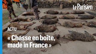 Tuer une laie pleine « ça s'arrose », One Voice dénonce la cruauté de la chasse en enclos