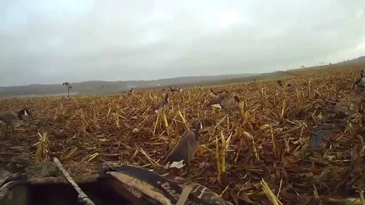 Layout Blind Duck Hunt In Corn Youtube
