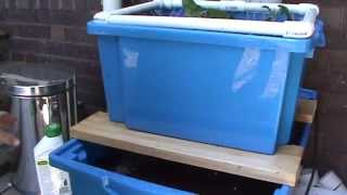 Phil's Gardening Tips And Tricks Aquaponics Set Up With Grow Bed And Planting