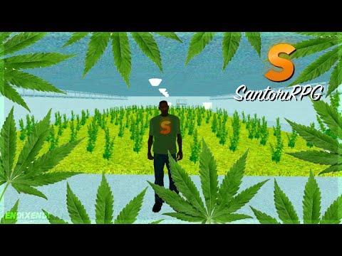 #2 Santori RPG - Zbieramy Marihuanę 🌿 | MTA