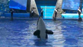 Awake and Alive- killer whales