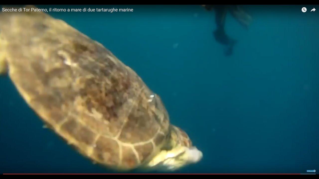 Secche di tor paterno il ritorno a mare di due tartarughe for Tartarughe di mare domestiche
