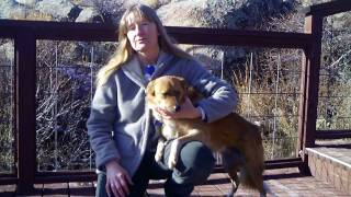 Dog Home Boarding In Colorado: Canine Campovers