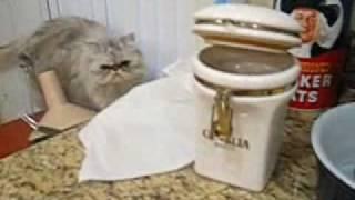 やさしい猫、犬のためにエサを取ってあげる(動画)