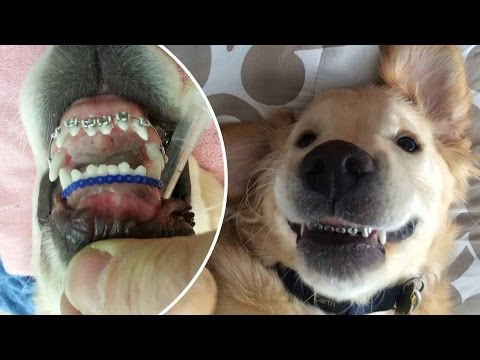 Thumbnail: Pampered pets, animals doing human things, first world animal problems and more - Compilation