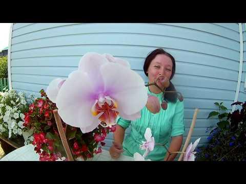 Цветок орхидея: уход за орхидеями, комнатные орхидеи