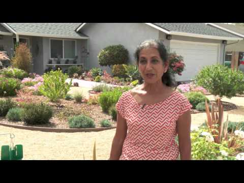 Garden Wise Episode 11: Lawn Be Gone: What To Do Next