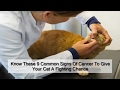 Know These 9 Common Signs Of Cancer To Give Your Cat A Fighting Chance