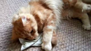 Epic funny cats high on catnip!! Compilation best of!