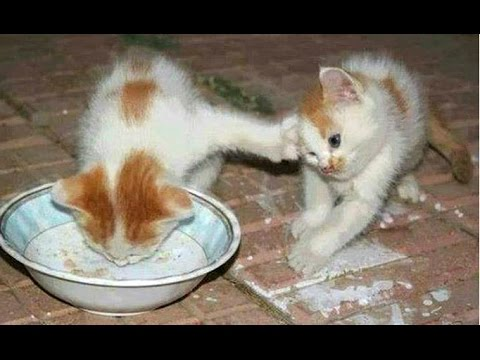Funny Cats And Kittens Who Dont Want To Share Their Food Compilation Best Of