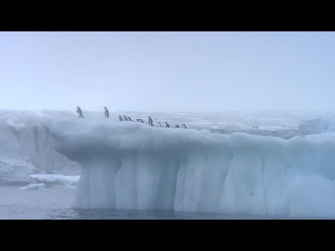 Impact of massive iceberg that broke off Antarctica