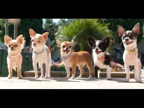 Collcetion Of Dog Breed Chihuahua Pictures | Chihuahua Dogs