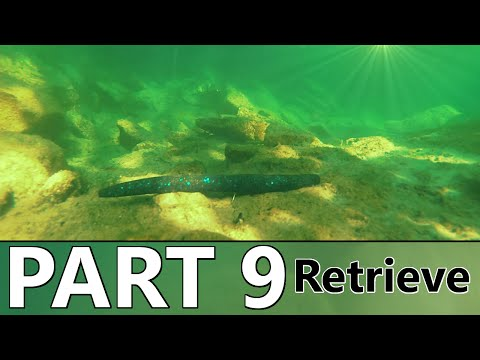 Beginner's Guide To BASS FISHING - Part 9 - The Retrieve And How To Attract Fish