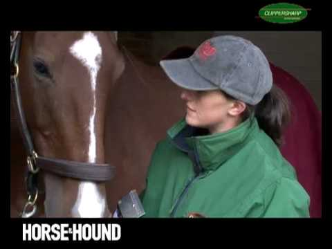 How to clip a horse: video masterclass