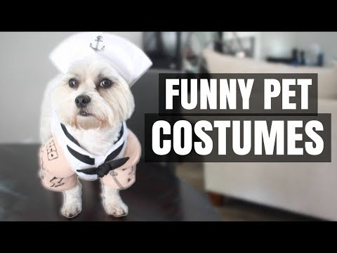 My Dog Trying On Halloween Costumes!! (8 Funny Pet Costumes 2017)
