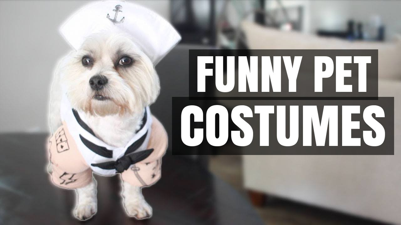 my dog trying on halloween costumes 8 funny pet costumes 2017