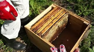 Видео урок по откачке мёда 2017 года Сибирь г. Омск