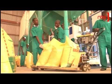 East Africa's biggest rice factory opens in Uganda