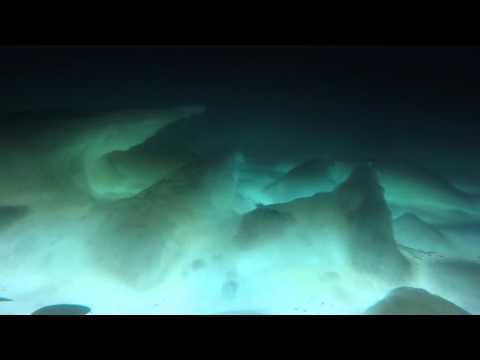 Under the sea ice at Palmer Station, Antarctica