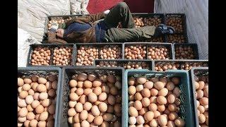 Бизнес на продаже яиц,производство яйца
