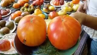 Выставка томатов от частных коллекционеров Латвии (Часть II)
