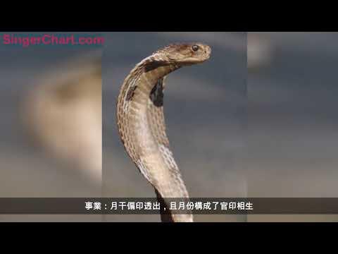 蛇有七寸,65年54歲蛇,生來就是還債的命?佛說一切都是安排!