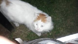 Cat and Pillow - Fat Cat - Big Cats - Cute Cats - Şişman, Yastık Gibi Kedi