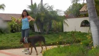 Walk Or Run Your Dog Leash Training Part 1 Leash Length