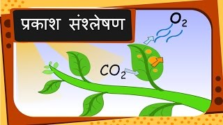 Science - Plant's food and Photosynthesis - Hindi
